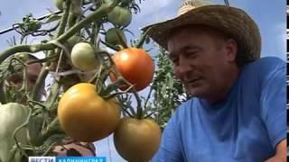 В Калининграде подвели итоги конкурса грантов для фермеров