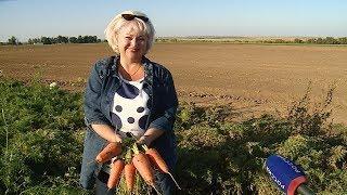 В Волгоградской области собрали уже более 300 тысяч тонн овощей