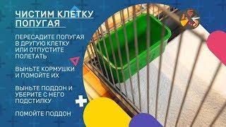 «Академия домашних дел». Выпуск 58