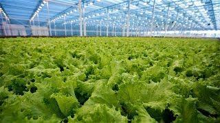 Зачем югорские фермеры объединяются в кооперативы?