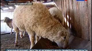 Семья из Украинки организовала ферму на 9 дальневосточных гектарах