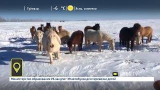 Мобильный репортер - 14.03.18