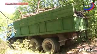 Профилактика пожара! В лесхозах республики идут работы по очистке от сухих деревьев и мусора