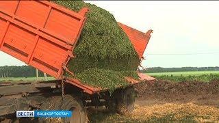 В Башкортостане началась заготовка кормов для животноводства