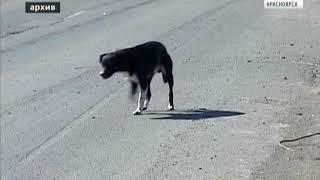Семья девочки, которую в Назарове покусала собака, отсудила у хозяйки животного 100 тысяч рублей