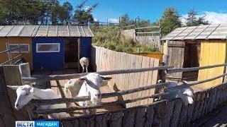 Единственный в Магаданской области зоопарк может закрыться