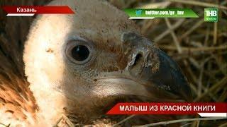 В Казанском зооботсаду пополнение: у пары белоголовых сипов появился птенец - ТНВ
