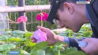 17 тысяч тюльпанов расцветут к 14 февраля