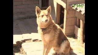 В Самарской Губернской Думе приняли новый закон о безнадзорных животных