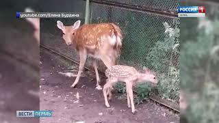 В Пермском зоопарке - пополнение