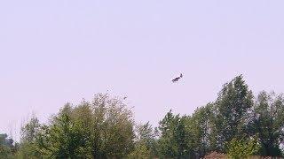 Волгоградские водоемы и зеленые зоны начали обрабатывать от мошки и комаров