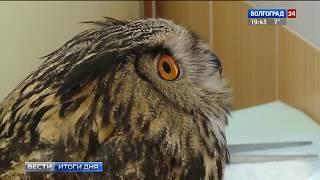 В ветеринарную больницу Волгограда доставили филина
