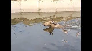 В Энгельсском района лосиха упала в водоканал