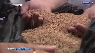 Качество волгоградского зерна – на высоте