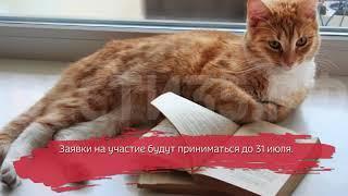В Вологодской областной библиотеке стартовал конкурс читающих котиков