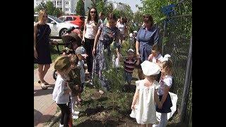 В 14-м детсаду Белгорода высадили полтора десятка молодых сосен