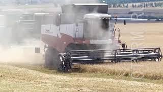 Аграрии Мордовии собрали миллион тонн зерна.