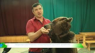 ИКГ Медведь и  мороженое #8