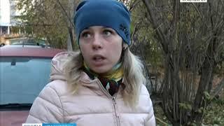 Анонс: в Красноярске территорию школы оккупировали бродячие собаки