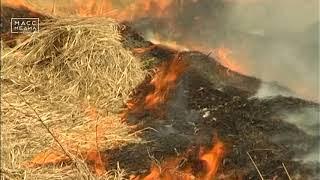 Пожароопасный сезон стартует 1 мая   | Новости сегодня | Происшествия | Масс Медиа
