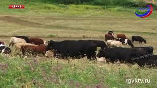 Чип на рога. Минсельхоз РФ предлагает ввести систему учета и маркировки животных