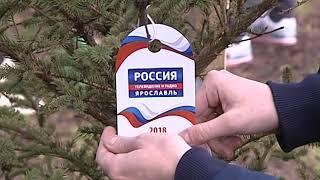 Сотрудники ГТРК «Ярославия» провели субботник и посадили молодые ели