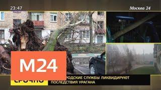 Более 500 деревьев повалены ветром в столице и других регионах ЦФО - Москва 24