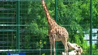 Общественный совет донского Главка устроил в зоопарке праздник для детей