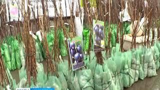 В краевом центре последнюю неделю работает ярмарка продукции Омского питомника
