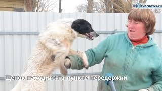 Наталья Федорова бросила работу в полиции и построила приют для собак
