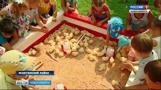В Искитимском районе прошел фестиваль «Золотой гребешок»