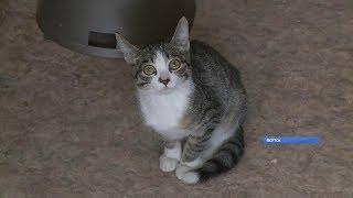 День кошек отмечают сегодня в России