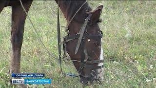 Студент в Башкирии застрелил чужого коня