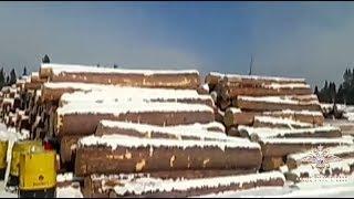 Сотрудники МВД России в Иркутской области задержали «черных лесорубов»