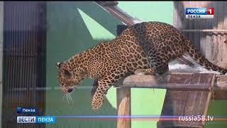 Быстрым и ловким питомцам зоопарка пензенцы принесли первые мячи для тренировки