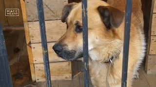 В камчатском приюте для животных пройдет день открытых дверей  Новости сегодня