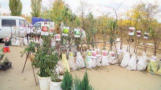 Специалисты Россельхознадзора мониторят места продажи саженцев