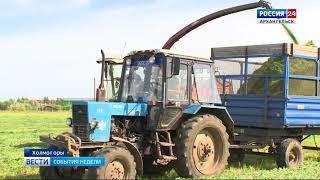 В Холмогорском районе - в разгаре кормозаготовительная кампания