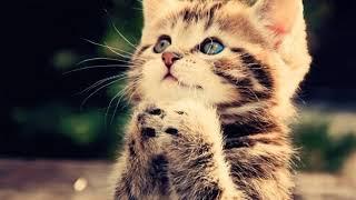 1 марта в России отмечают День кошек