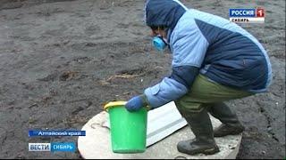 В Алтайском крае проводят дезинфекцию дворов после паводка