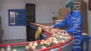 Мордовия - лидер по производству куриных яиц среди субъектов РФ.