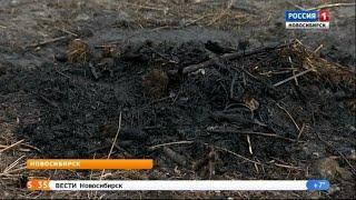 Особый противопожарный режим в Новосибирской области могут ввести 28 апреля