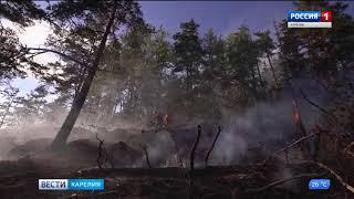 263 гектара леса горит в Карелии