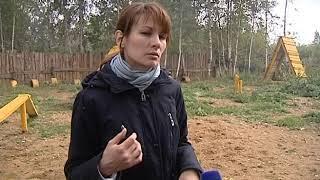 Волонтеры Ярославля обучают бездомных собак служебным командам