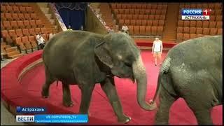 Из Варшавского цирка в Астрахань приехали слоны
