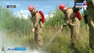 Смоленские пожарные ликвидировали возгорание леса