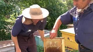 В Среднебельской колонии осужденные выращивают овощи и занимаются пчеловодством.