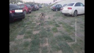 Испорченный газон и сломанные тренажеры: результат первых дней работы парка на Левобережной