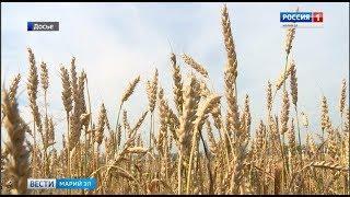 Марий Эл получит 22 миллиона рублей на закупку дизтоплива для аграриев