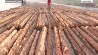 Объемы заготовки леса силами осуждённых ГУФСИН Красноярского края выросли